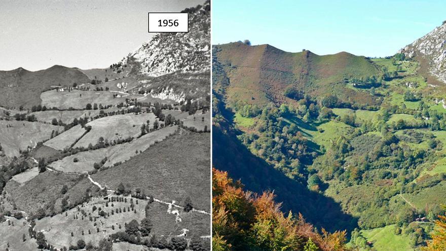 Diez ideas para que Asturias, el paraíso natural, evite acabar convertida en un desierto verde sin gente
