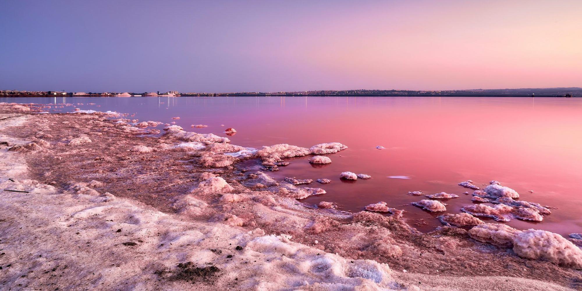 rosa-torrevieja-turismo.jpg