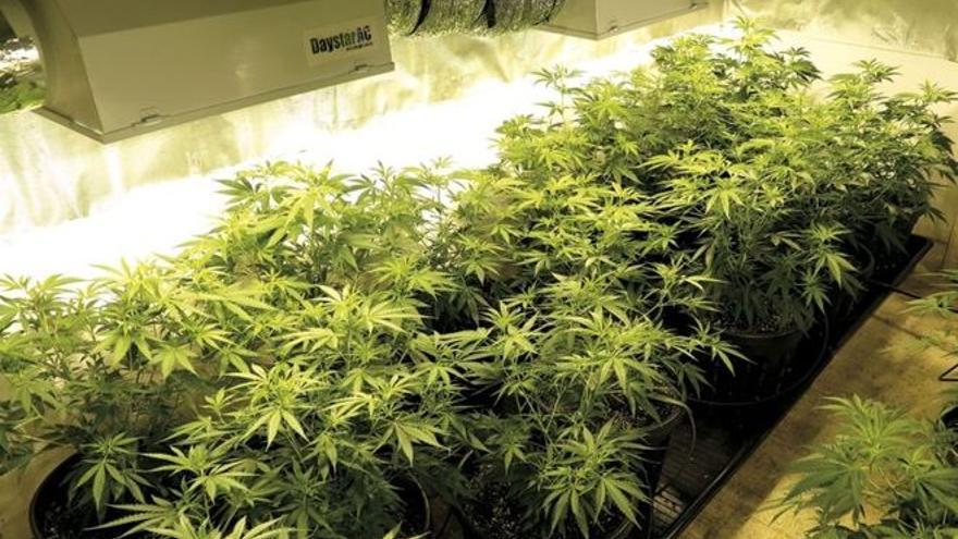Herido un mosso de una perdigonada en una trampa en un cultivo de marihuana