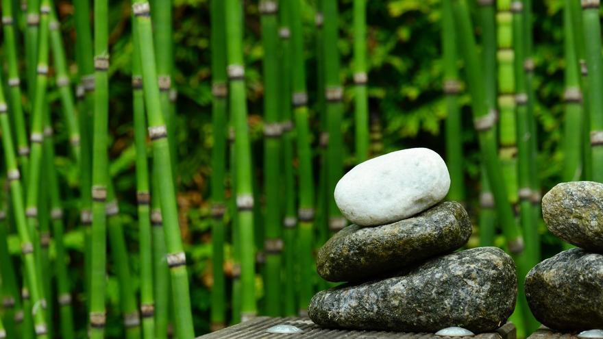 Pon una planta de bambú en tu hogar y atrae la buena suerte para tu familia