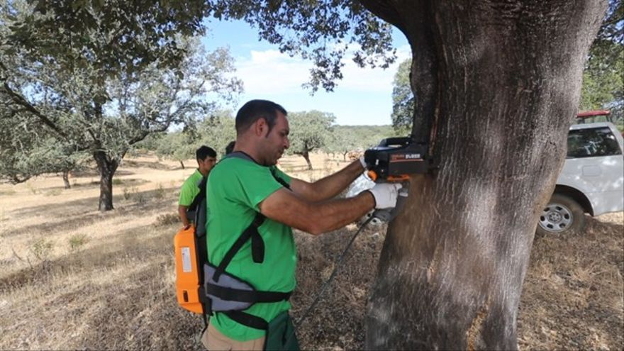 GoDehesa promueve el manejo holístico y la ganadería sostenible para conservar la dehesa