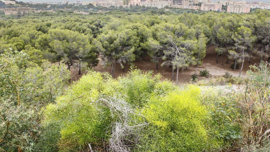 Hidralia, comprometida con la preservación de los ecosistemas