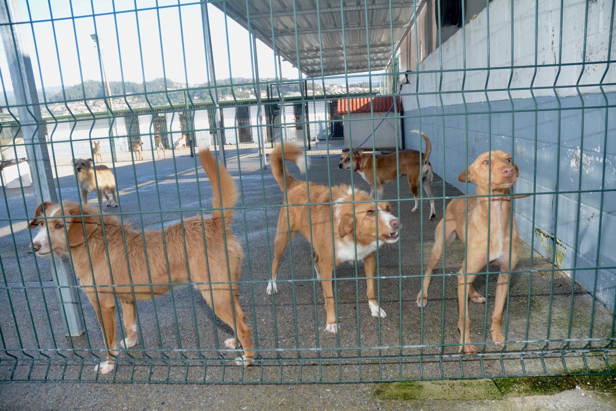 Perros de Os Palleiros acogidos en la protectora