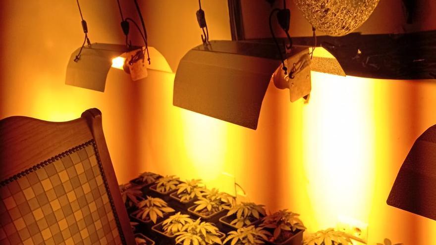 Descubren una plantación de marihuana en una intervención por una fuga de agua