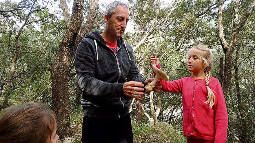 So geht man auf Mallorca Pilze sammeln