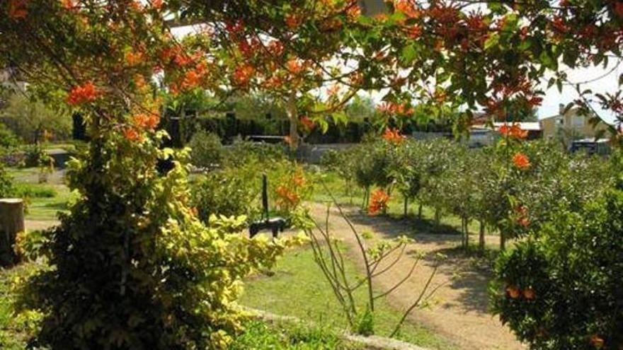 Palmera imperial del Jardín Huerto del Cura, en Elche INFORMACIÓN