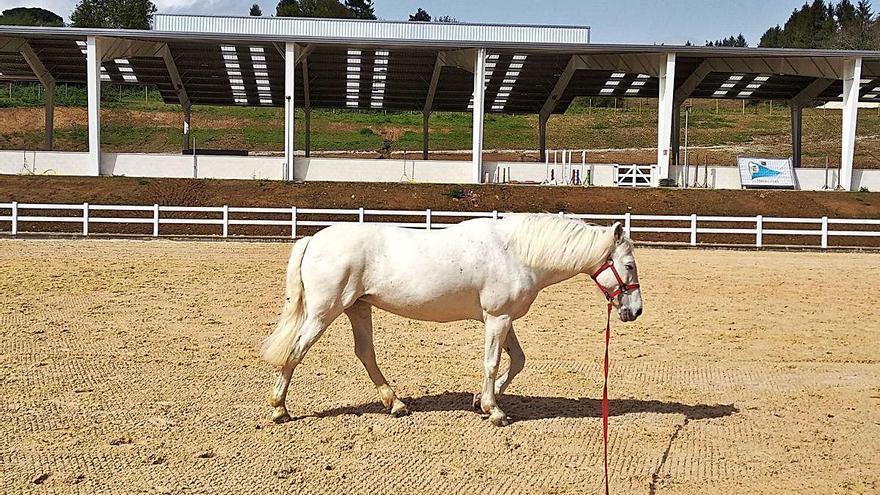 La Hípica reclama que sus caballos puedan ser montados para evitarles problemas físicos