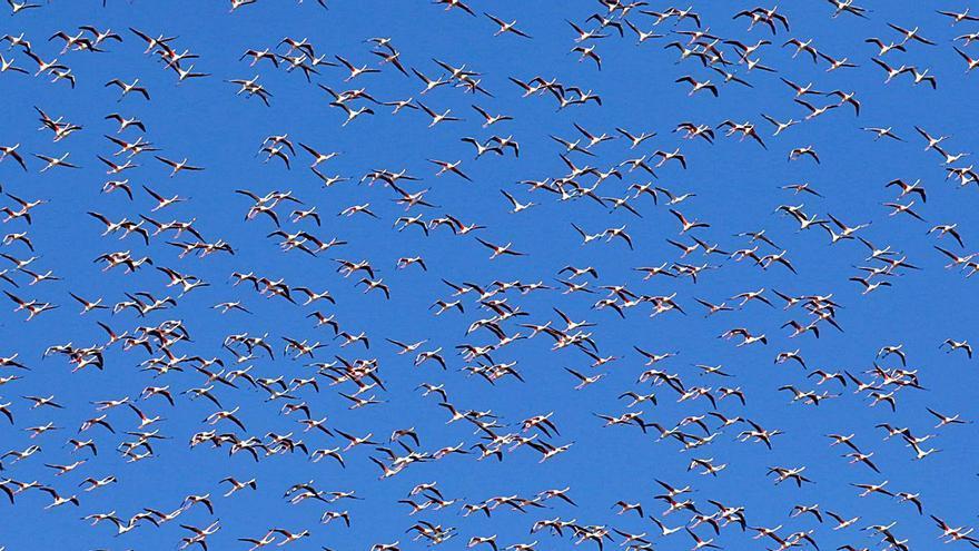 La Sociedad de Ornitología critica que se permita cazar en l'Albufera