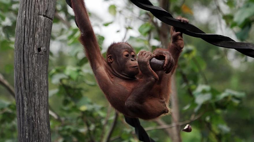 ¿Humano, puedo ayudarte? La foto viral de un orangután que tiende la mano a un hombre