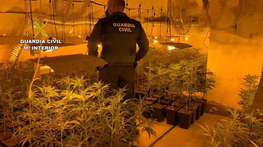 Intervenidos más de 1.300 esquejes de marihuana y 1.600 plantas en cultivos 'indoor' de Miajadas y Escurial