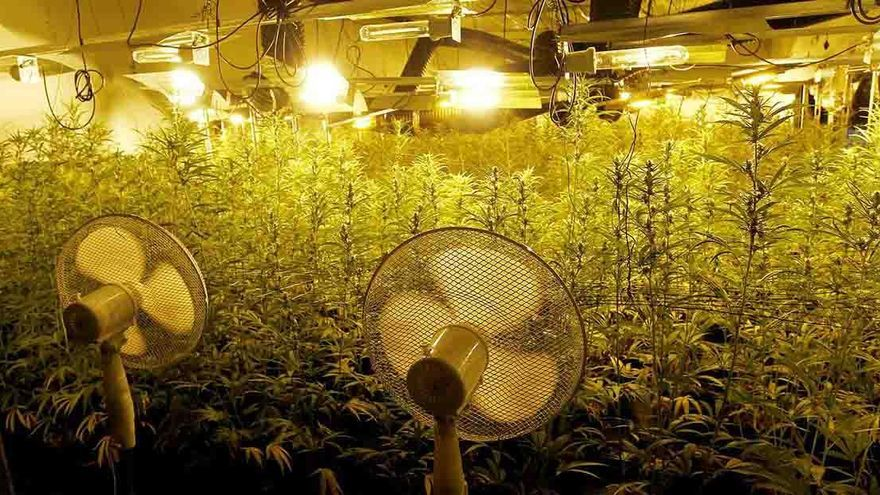 Cuatro menores, uno de ellos recién nacido, vivían en un chalé de Calp que escondía mil plantas de marihuana