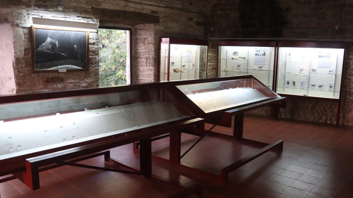 Una de les sales d'exposició del Museu Arqueològic de Banyoles amb algunes de les vitrines buides