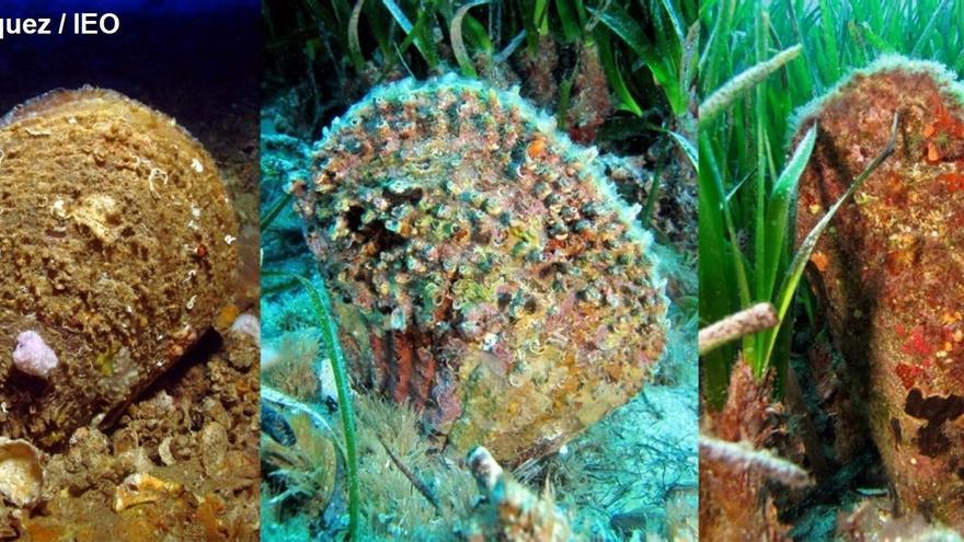 El 45% de 40 especies de peces y crustáceos analizados han ingerido microplásticos