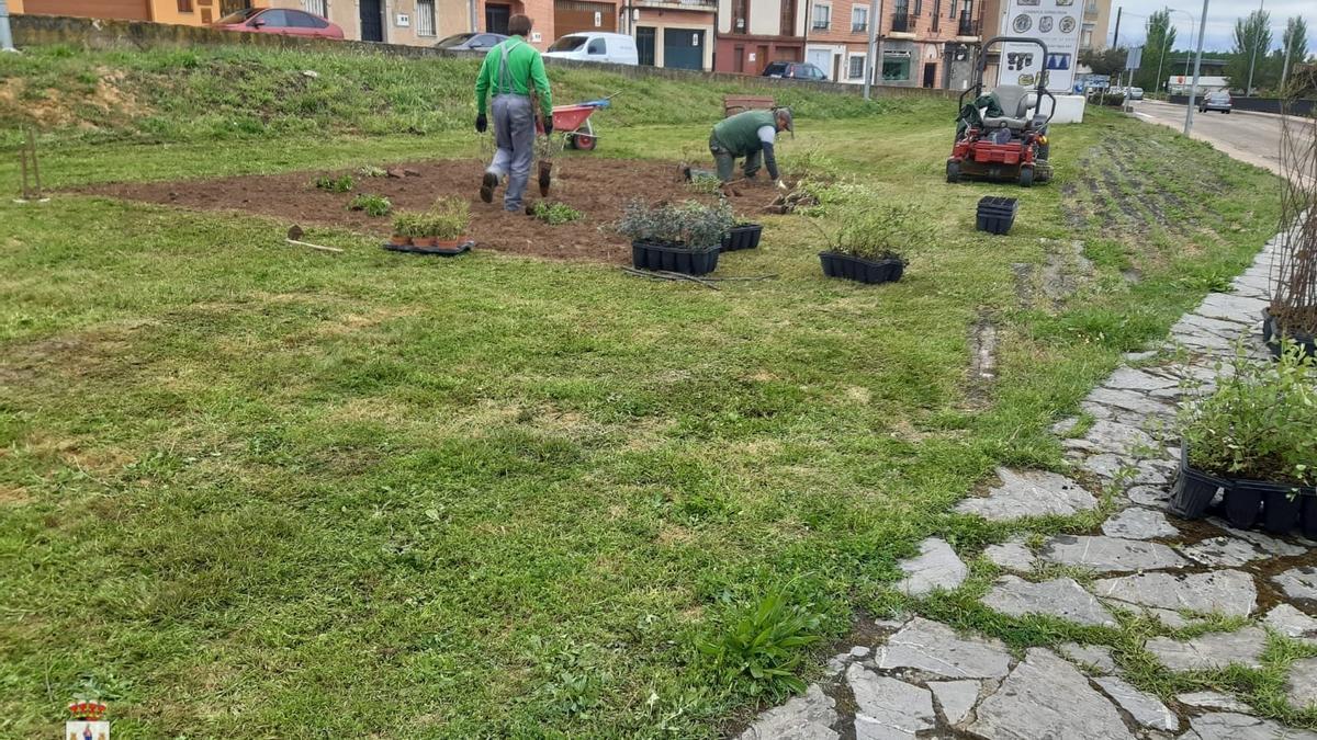Operarios municipales en la recuperación de un espacio verde en Benavente. / E. P.