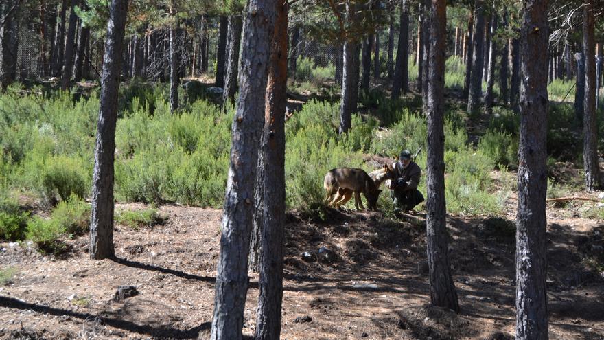 Las mejores imágenes de la visita al Centro del Lobo de Robledo de Sanabria / J. L. F.