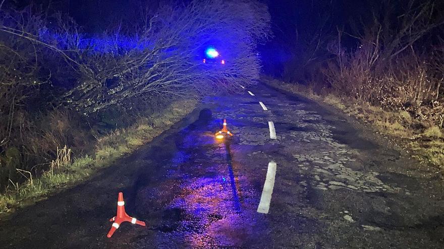 Un árbol caído dificulta el paso en la carretera de Cobreros