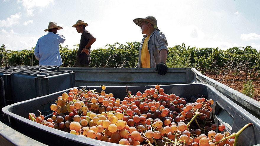 Wie Corona den Wein- und Olivenproduzenten das Leben schwer macht