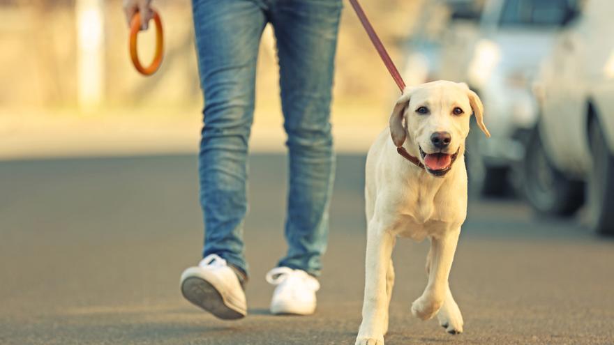 La ley de protección animal prevé exigir un curso para tener mascotas
