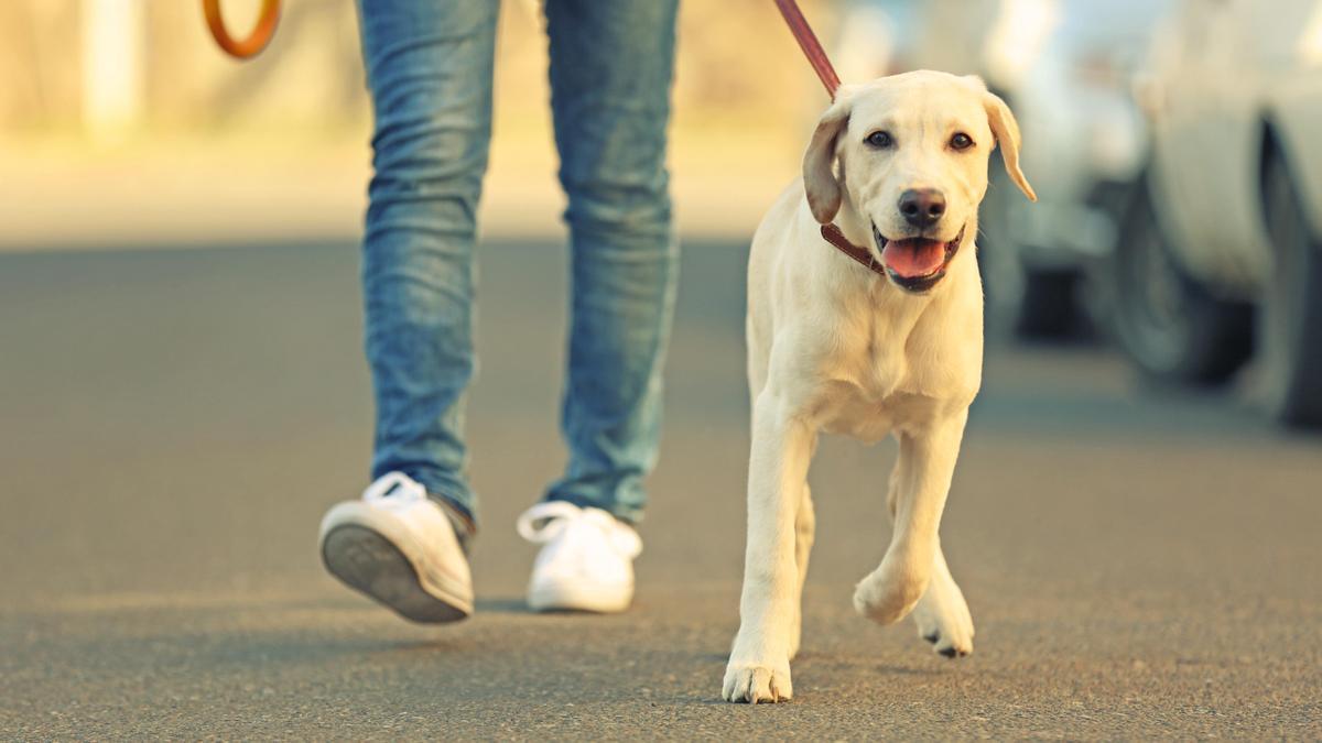 El Gobierno prevé retirar los animales de compañía si el dueño no garantiza sus derechos.
