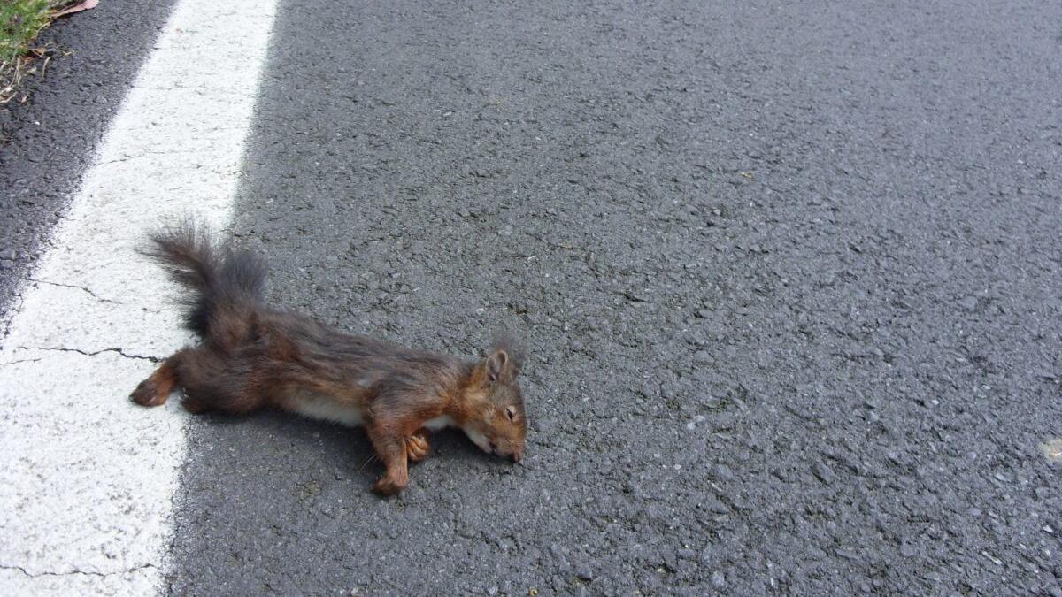 Una ley tratará de reducir el atropello de animales en carretera
