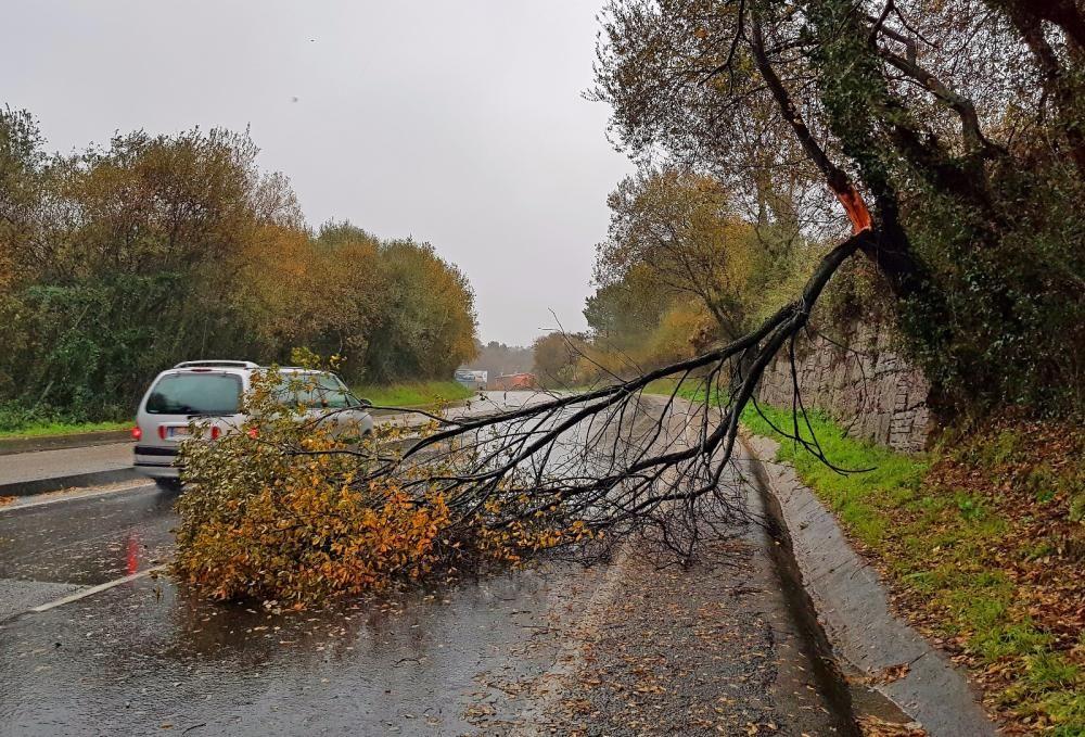Árbol caído en medio de un carril en la Avenida Clara Campoamor de Vigo.