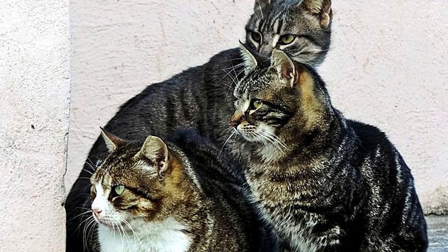 La vida en una colonia de gatos
