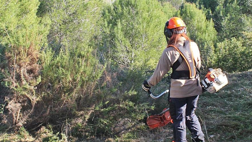 El proyecto Guardian inicia los trabajos forestales en el Parc Natural del Túria