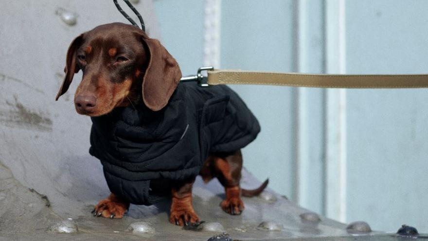 La nueva aventura de Zara: una línea de ropa para mascotas