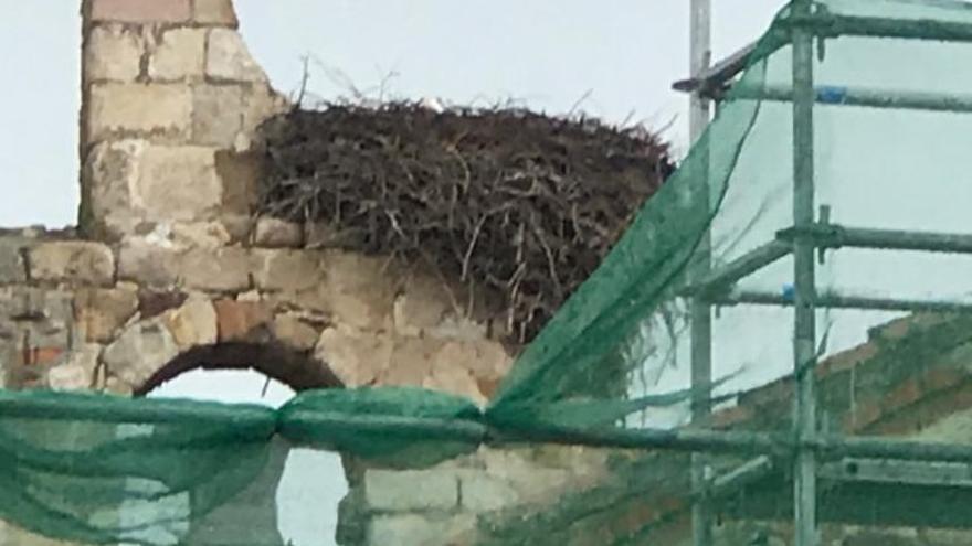 Ecologistas alertan de riesgos para las cigüeñas por las obras en la iglesia de Entrala