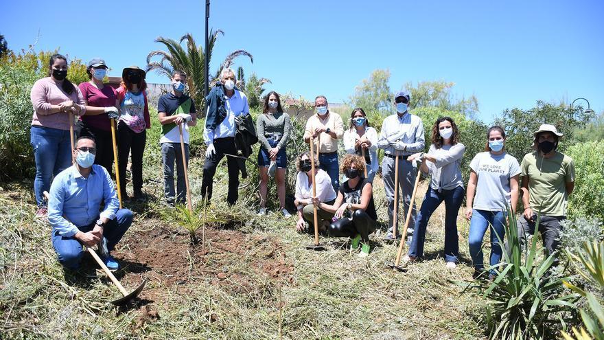 El Cabildo y Santa Úrsula recuperan el bosque termófilo de La Quinta
