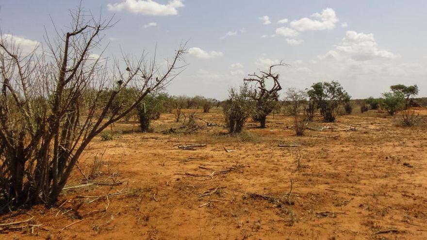 La mayor extinción de la Tierra afectó primero a las plantas