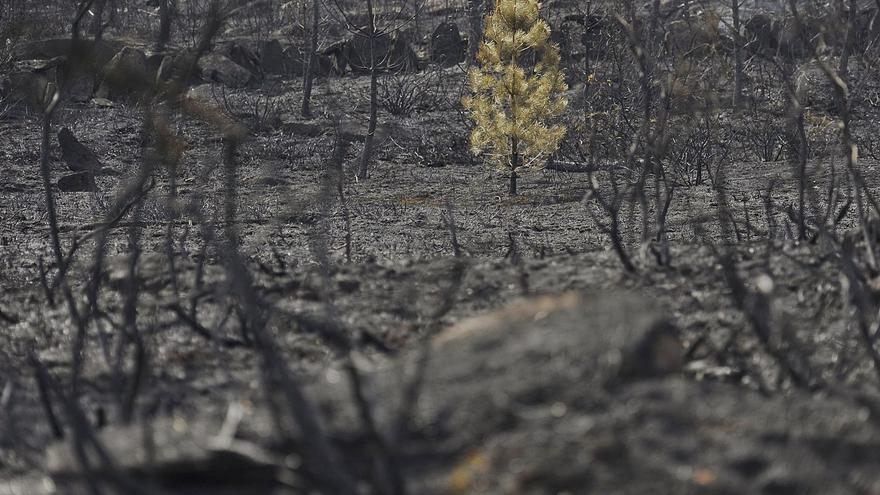 Los cambios de uso en terrenos tras los incendios, con lupa
