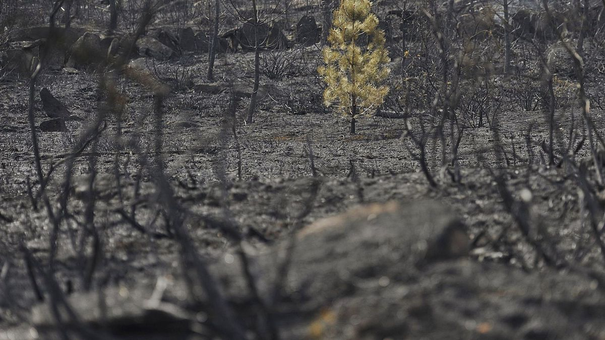 Imagen de archivo de los efectos  de un incendio en la comarca  del Deza.   | // BERNABÉ / JAVIER LALÍN