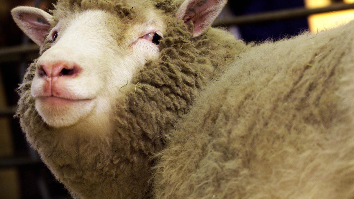 La oveja Dolly