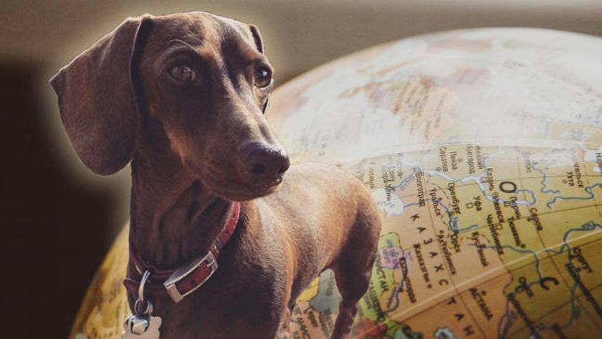 La aventura de Pip, el perro que tuvo que cruzar el mundo para volver con su familia