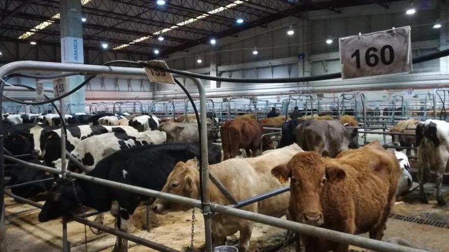 La Xunta explorará la creación de un mercado virtual de ganado vacuno