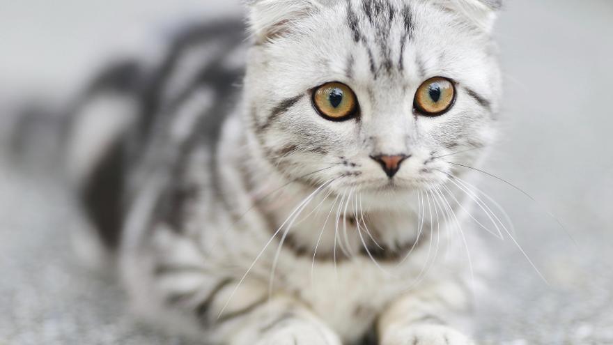¿Pueden detectar los gatos presencias que los humanos no ven?
