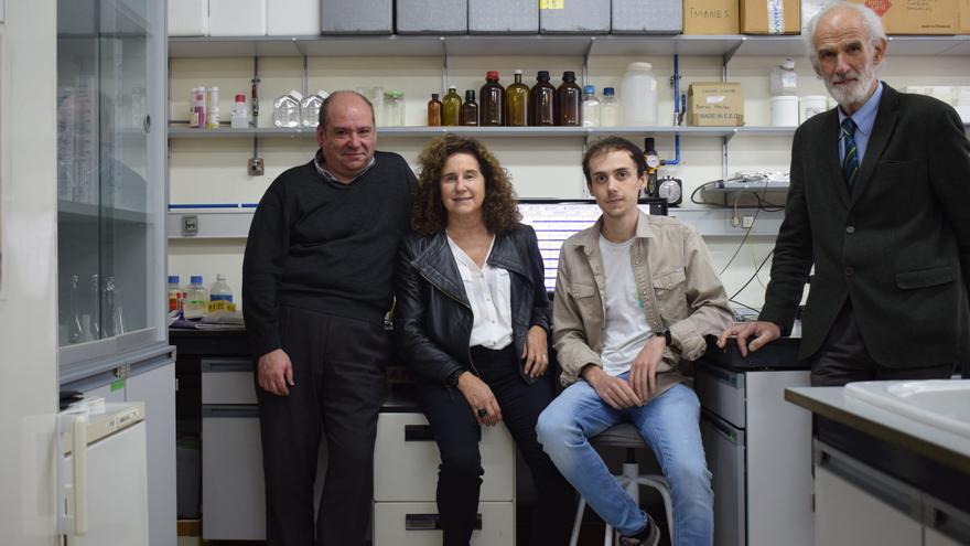 Asturias abre la puerta a nuevos fármacos tras lograr predecir cómo se desarrollan las redes neuronales