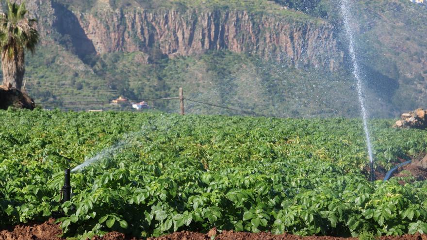 Los Realejos regala semillas y árboles frutales a agricultores en paro