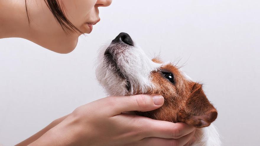 Los perros pueden detectar con precisión el cáncer en la sangre