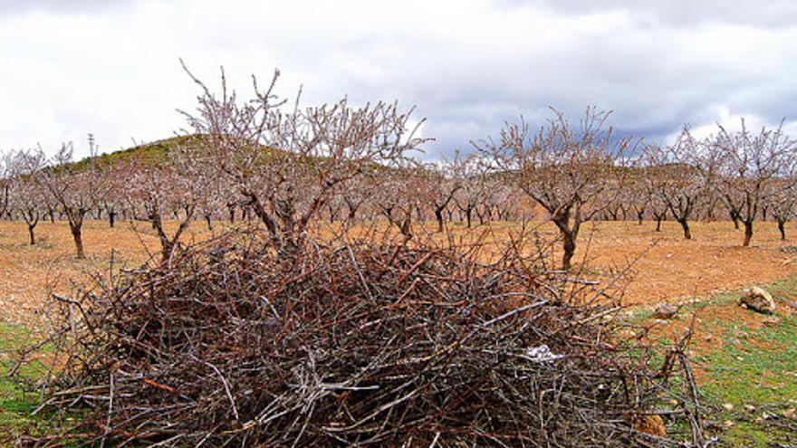 El Ayuntamiento de Cehegín habilitará un punto junto al Ecoparque para los restos de podas agrícolas