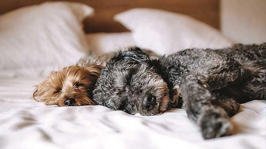 ¿Es malo dormir con el perro?
