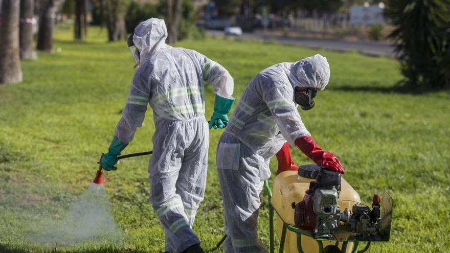 Los afectados por el virus del Nilo vuelven a subir a 37