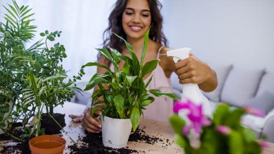 Com cuidar les plantes d'interior perquè et durin i visquin sanes?