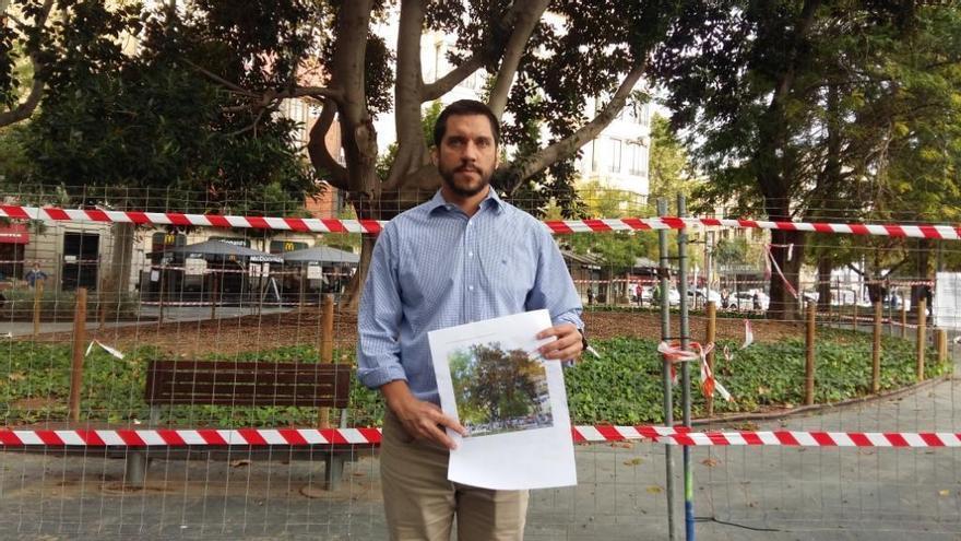 El ficus de la plaza España se quedará sin ramas ni hojas