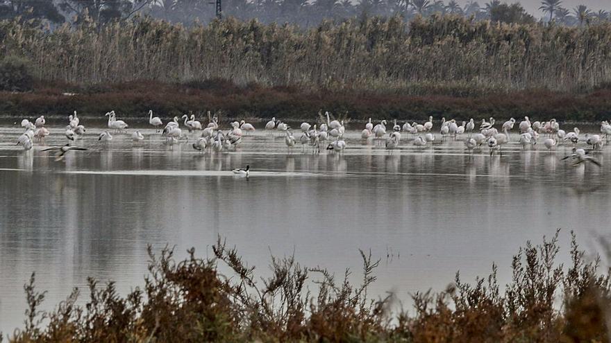 La Conselleria dejó caducar expedientes sobre la gestión de la caza en El Hondo