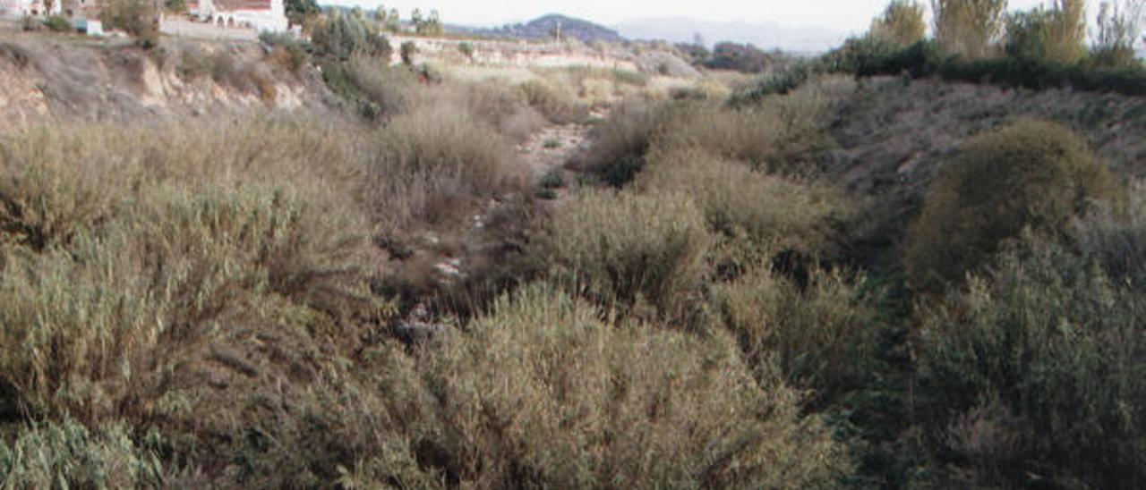La vegetación silvestre se dispara en el cauce del Cànyoles entre Sorió y el CC Plaza Mayor