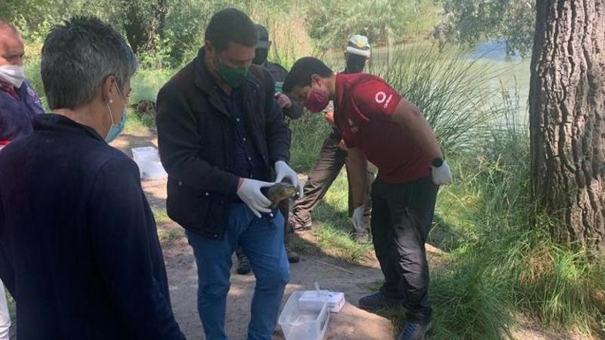 Liberados seis galápagos leprosos en Calasparra tras ser atendidos en el Centro de Recuperación