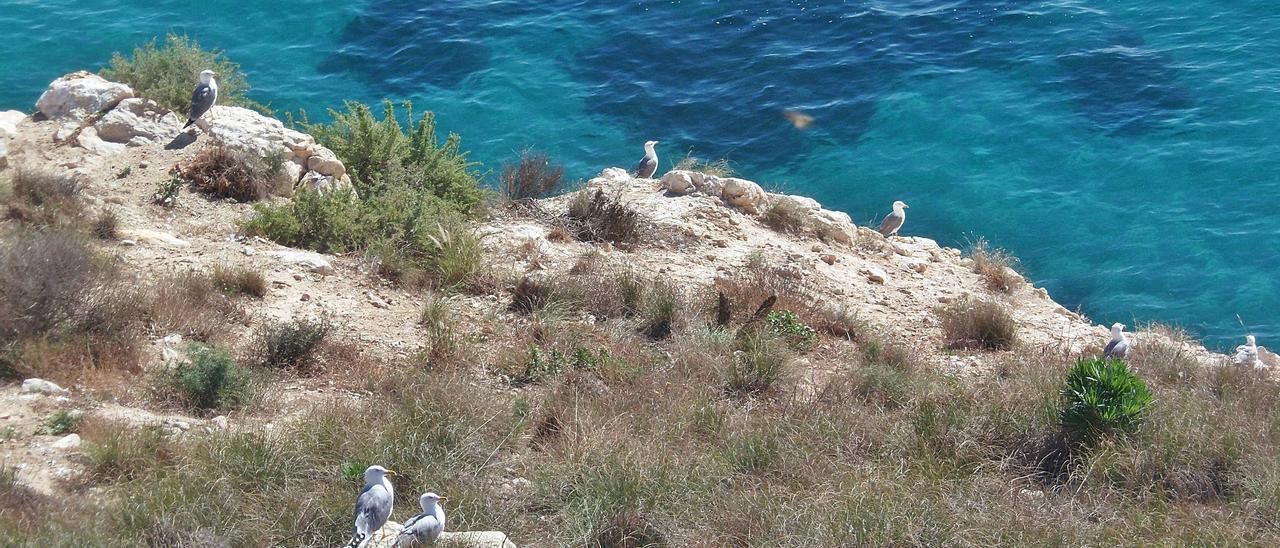 El acantilado de Coveta Fumà donde se proyectaban dos chalés de lujo y cuya protección ha ampliado Costas.   J.A.RICO