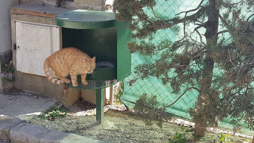 Enverinen gats de carrer a Torroella i l'Estartit